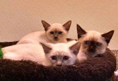 3 KITTYENS